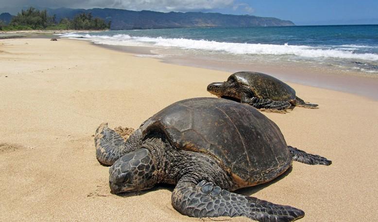 Isla de Las Tortugas