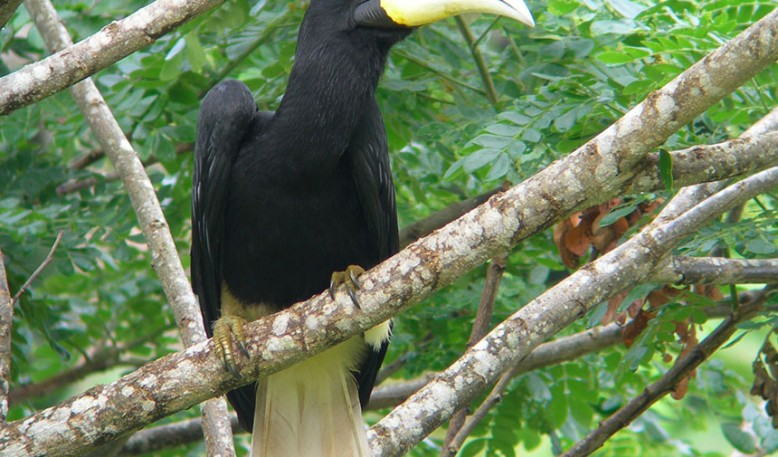 Rainforest de Borneo