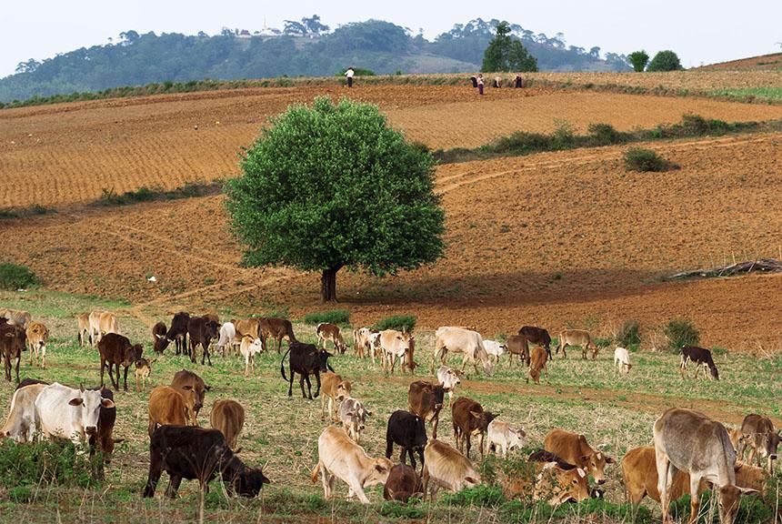 trekking en Birmania