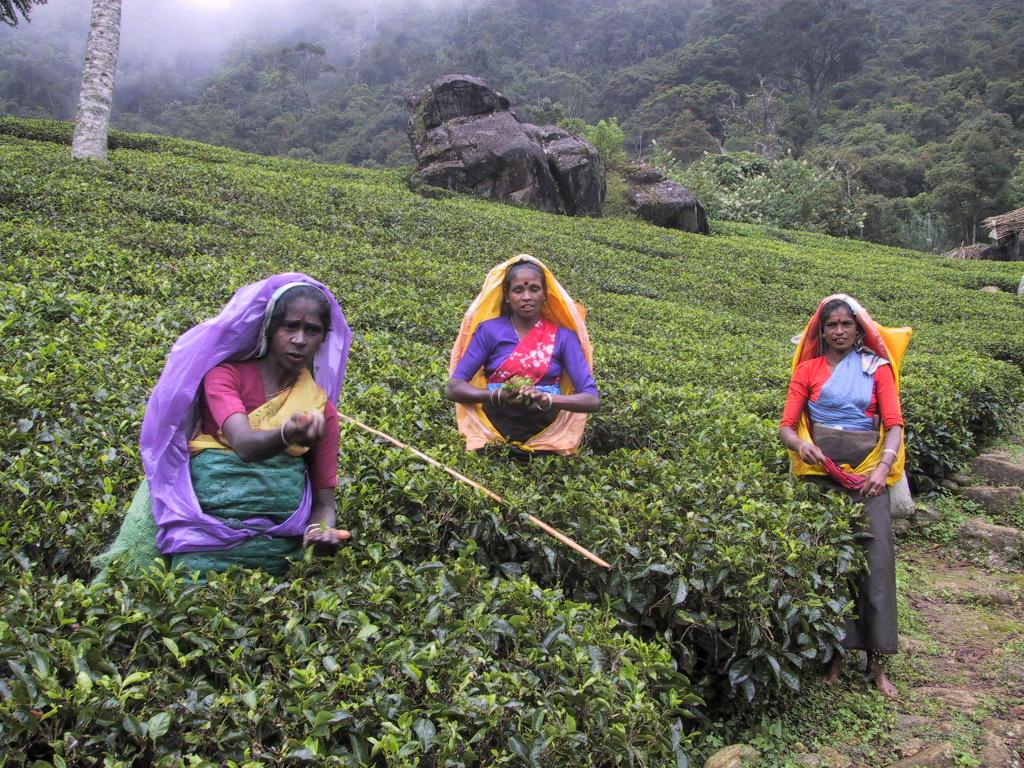 viajes a Sri Lanka